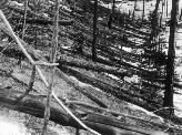Tunguska 20 years after the blast, when the first exploratory expedition reached the area in 1928