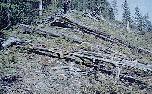 Tunguska in 1991