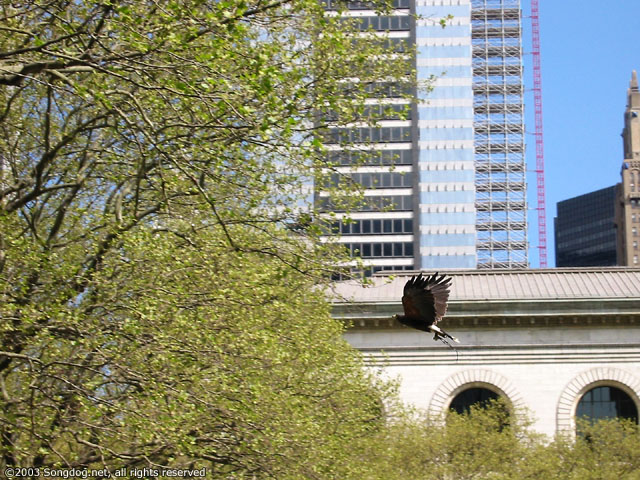 Galan In Flight With NYPL