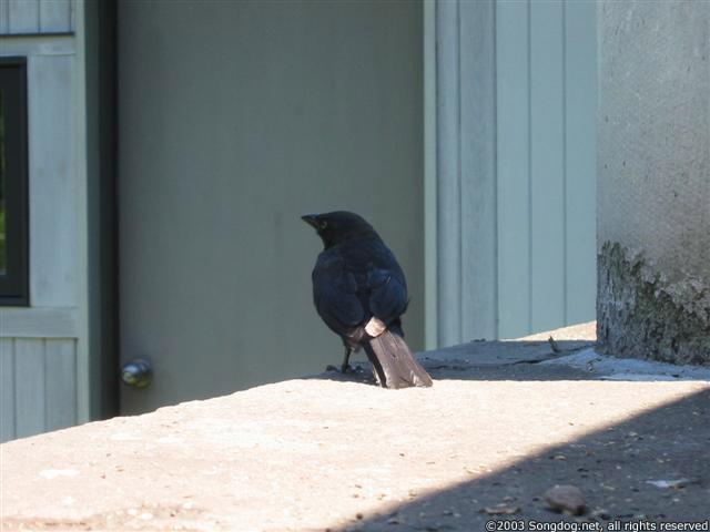 Monterey Bird